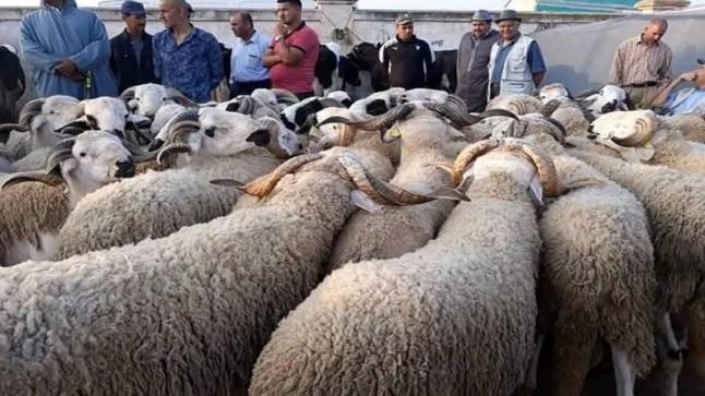 الجزارين المهنيين مطالبون بإجراء اختبار كورونا قبل ذبح الأضاحي
