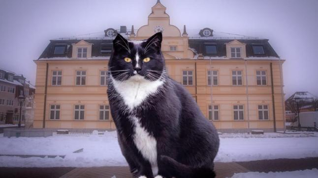 قط يترشح لمنصب عمدة مدينة ألمانية