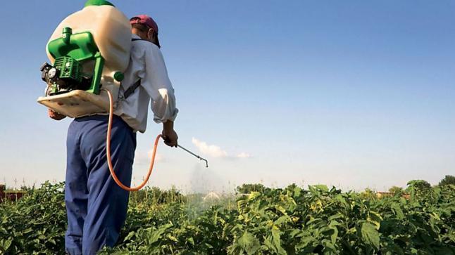 """""""أونسا"""" يعيد النظر في المبيدات الزراعية المتضمنة لمادة """"كلوربيريفوس"""""""