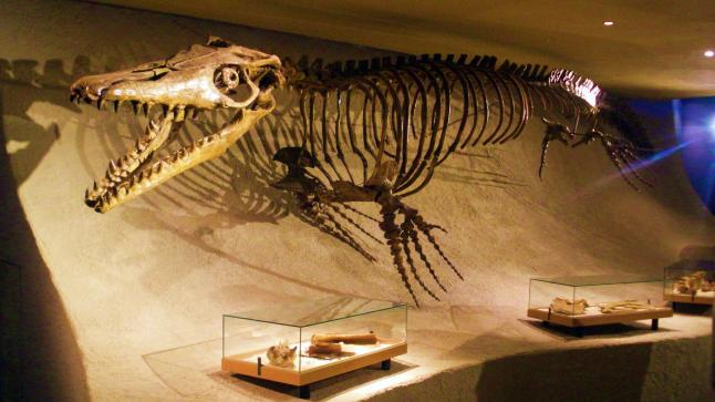 """اكتشاف سحلية بحرية ب""""أسنان القرش"""" من العصر الطباشيري بالمغرب"""